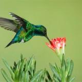 Hummingbird y los Cambios en Google