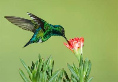 seo-con-hummingbird